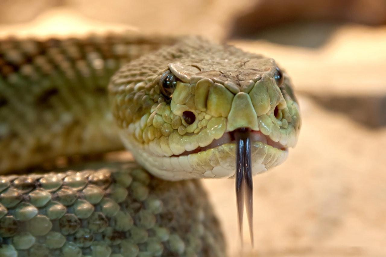 Bir rüyada, bir yılan öldürmek, gerçekte savaşmak anlamına gelmez